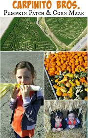 Pumpkin Patch Tacoma Wa by Carpinito Bros Pumpkin Farm U0026 Corn Maze Thrifty Nw Mom