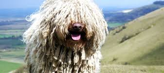 the 14 hypoallergenic dogs breeds