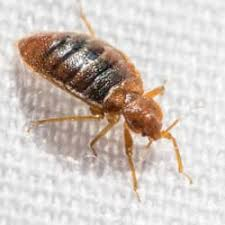 Bed Bugs Found In Livingston New Jersey
