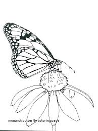 Monarch Butterfly Coloring Pages Page For Print