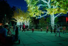 Kroger Christmas Tree Lights by Toledo Zoo Christmas Lights Rated Best By Usa Today The Blade
