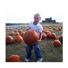 Colorado Pumpkin Patch Farm Camp by Top 20 Places To Take Kids In Denver Co Kids Out And About Denver