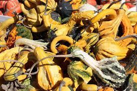 Morgan Hill California Pumpkin Patch by Uesugi Farms Pumpkin Park Home Facebook