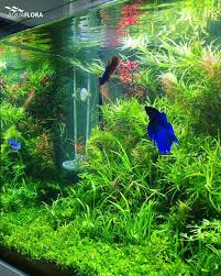 Pin By Ally Bragg On Design & Technology | Pinterest | Planted ... Out Of Ideas How To Draw Inspiration From Others Aquascapes Aquascaping Aquarium The Art The Planted Plant Stock Photo 65827924 Shutterstock Continuity Aquascape Video Gallery By James Findley Green With River Rocks Aqua Rebell Qualifyings For 2015 Maintenance And Care Guide Outstanding Saltwater Designs 2012 Part 1 Youtube Dennerle Workshop Fish