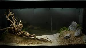 Aquarium Setup Aquascape Step By Step And Final Product Live ... How To Set Up An African Cichlid Tank Step By Guide Youtube Aquascaping The Art Of The Planted Aquarium 2013 Nano Pt1 Best 25 Ideas On Pinterest Httpwwwrebellcomimagesaquascaping 430 Best Freshwater Aqua Scape Images Aquascape Equipment Setup Ideas Cool Up 17 About Fish Process 4ft Cave Ridgeline Aquascape A Planted Tank Hidden Forest New Directly After Setting When Dreams Come True