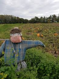 Freeport Pumpkin Festival Maine by Wolfe U0027s Neck To Focus On Environment U0027regenerative Farming