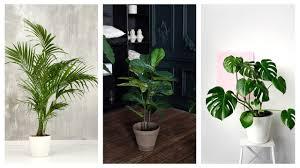 welche pflanze für welches zimmer tipps und ideen für