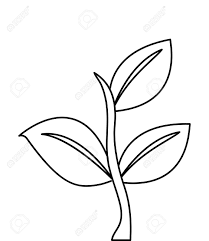 Sprout Clipart Coffee Plant Png Stock