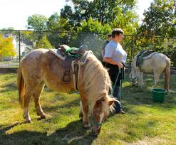 Pumpkin Patch Nj Chester by Hazel Avenue Holds Fall Fest News Tapinto