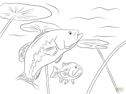 Click The Largemouth Basses Coloring Pages