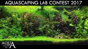 Aquascaping Contest 2017 Ranking And Winner