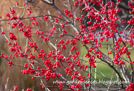 Winterberry Christmas Tree by Garden Sense Christmas Accents