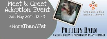 Crossed Paws Meet & Greet Pottery Barn Galleria Dallas