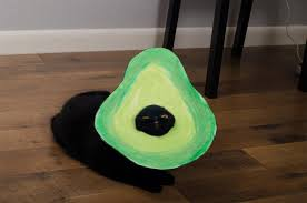 costume for cat avocato is this year s best cat costume the daily dot