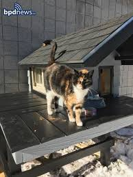 cats on deck stray cat gets own headquarters at boston swat office