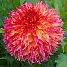 the 25 best flower bulbs for sale ideas on bulbs for