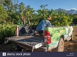 100 Seedling Truck Reforestation Project Stock Photos Reforestation Project Stock
