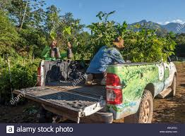 100 Seedling Truck Two Men Loading Seedlings On Truck For Reforestation Project
