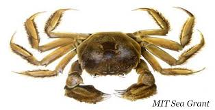 Halloween Hermit Crab Lifespan by Snow Crab Love Snickers Tato Skins And Crabs