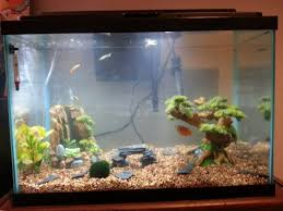 Upgraded My 10g To A 20g Last Night! Aquascaping Ideas? : Aquariums Home Accsories Astonishing Aquascape Designs With Aquarium Minimalist Aquascaping Archive Page 4 Reef Central Online Aquatic Eden Blog Any Aquascape Ideas For My New 55g 2reef Saltwater And A Moss Experiment Design Timelapse Youtube Gallery Tropical Fish And Appartment Marine Ideas Luxury 31 Upgraded 10g To A 20g Last Night Aquariums Best 25 On Pinterest Cuisine Top About Gallon Tank On Goldfish 160 Best Fish Tank Images Tanks Fishing