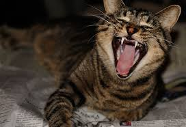 cat dental care top ten tips on how to keep your cat s teeth clean petmd