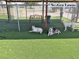 Dog Runs - NexGen Lawns Dogfriendly Back Yard Dogscaped Yards Pinterest Dog Superior Fence Cstruction And Repair Kennels Roseville Ca Domestically Dobson Run Fun Better Than A Ideas For Your Fourlegged Family Backyard Kennel Side Our House Projects Yards Artificial Turf Runs Pet Synthetic Of Illinois Youtube How To Build A Guide Install Image Detail Black Backyards Awesome 25 Best About Outdoor On