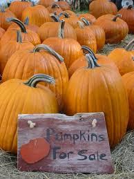 Flower Mound Pumpkin Patch Groupon by Deardorff Orchards