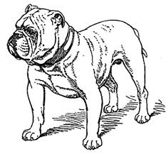 Best Bulldog Coloring Pages 25 For Picture Page With