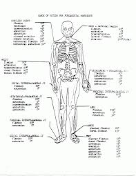 Awesome Anatomy And Physiology Coloring Book Pages Free