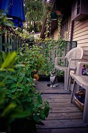Small Balcony Garden Ideas 7