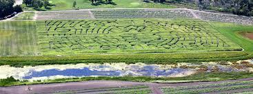 Fargo Pumpkin Patch by The 5 Best Corn Mazes In North Dakota 2016