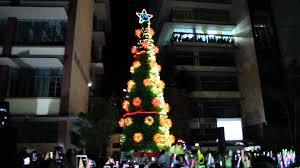 Chicago Christmas Tree Disposal by Slu Christmas Tree Lighting Ceremony 2015 Youtube