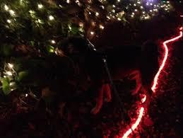 Christmas Tree Lane Fresno by Christmas Tree Lane Brings A Splash Of Holiday Color To Fresno