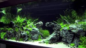 XL Tanks Of The Aquascaping Contest