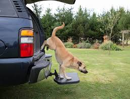 The Best Dog Steps And Ramps For The Car 2018 | Dogs Recommend Folding Alinum Dog Ramps Youtube How To Build A Dog Ramp Dirt Roads And Dogs Discount Lucky 6 Ft Telescoping Ramp Rakutencom Load Your Onto Trump With For Truck N Treats Using Dogsup Pet Step For Pickup Best Pickup Allinone Pet Steps And Nearly New In Box Horfield Land Rover Accsories Dogs Uk Car Lease Pcp Pch Deals Steps Fniture The Home Depot New Bravasdogs Blog Car Release Date 2019 20