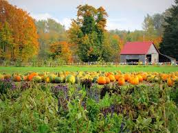 Pattersons Pumpkin Patch Gig Harbor by 14 Best Port Orchard Wa Images On Pinterest Orchards Port