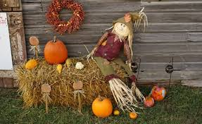 Omaha Pumpkin Patch by Daily Deal Omaha Half Off Admissions To The Pumpkin Patch Corn
