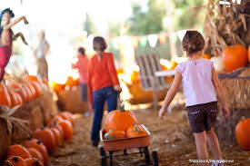 Pumpkin Farm Clarence Ny by Two Of The Best Fall Festivals In Buffalo Ny Asa Ransom House
