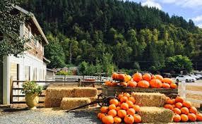Greenbluff Pumpkin Patch Spokane Wa Hours by 13 Charming Pumpkin Patches In Washington