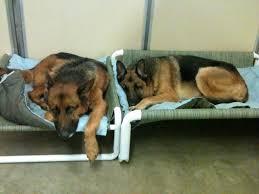 Kirkland Dog Beds by Model Of Pvc Dog Bed U2014 Bitdigest Design Build A Pvc Pipe Dog Bed