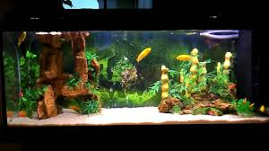 Beautiful Home Aquarium Design Ideas And Awesome Aquariums For ... Amazing Aquarium Designs For Your Comfortable Home Interior Plan 20 Design Ideas For House Goadesigncom Beautiful And Awesome Aquariums Cuisine Small See Here Styfisher Best Stands Something Other Than Wood Archive How To In Photo Good Depot Kitchen Cabinet Sale 12 To Home Aquarium Custom Bespoke Designer Fish Tanks Perfect Modern Living Room Lighting 69 On Great Remodeling Office 83 Design Simple Trending Colors X12 Tiles Bathroom 90