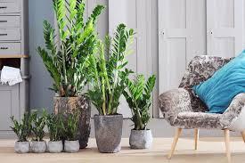 luftreinigende pflanzen mein schöner garten