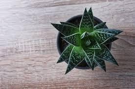 plante chambre 6 plantes pour purifier l air de votre chambre