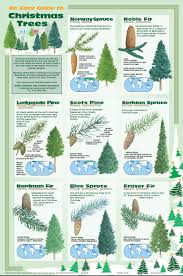 Size Image Dimensions 556 X 840 Parent Post Christmas Tree Guide