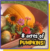 Pumpkin Patch Near Killeen Tx by We Have A Lot Of Faqs Dewberry Farm Corn Maze Pumpkin Patch