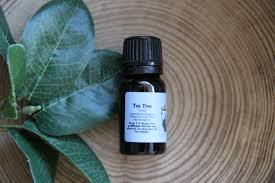 Frankincense 10 Ml Dropper Tea Tree Organic Essential Oil 10 Ml Believe Merch Coupon Codes Refresh Eye Drops Walmart Coupons Free 2 Best Selling Gifts Promotional Melaleuca Code Everglades Invasive Species Captain Mitchs Grocery For Couponing Kidcam Promo 2019 Rogaine Discount Waitr May Victoria Secret 30 Off J Spencer Tulsa Peaches Petals April 2018 Subscription Box Review Coupon Smartsource 81218 Oster Retail Partners Android Apk Download Joseph Turner Timpanogos Storytelling Festival