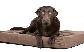 Chewproof Dog Bed by 5 Of The Best Elevated Dog Beds Simply For Dogs