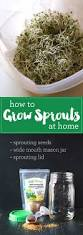 Sprouting Pumpkin Seeds by Best 25 Growing Sprouts Ideas On Pinterest How To Grow Sprouts