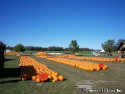 Pumpkin Patches Maryland Heights Mo by Rombach Farms Pumpkin Patch