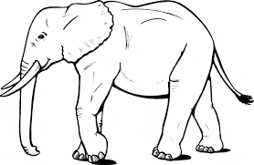 African Elephant From The Side Coloring Page
